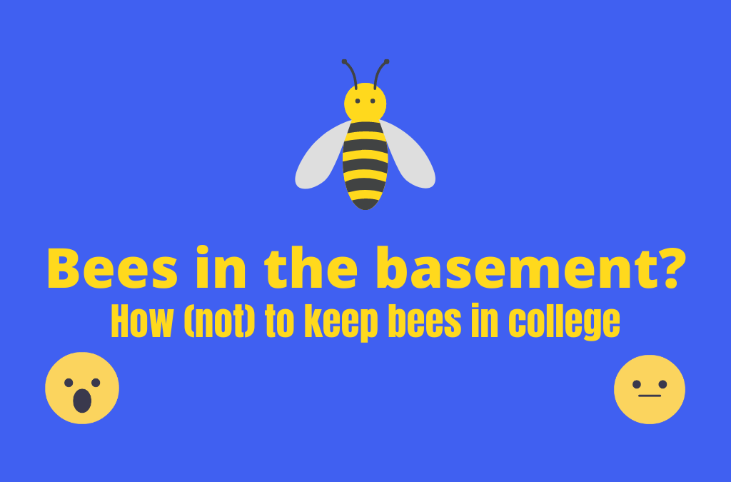 Bees in the Basement? How (not) to keep bees in college.
