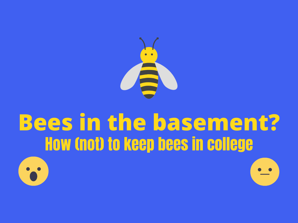 Bees in the basement smaller