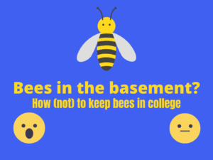 Bees in the Basement?